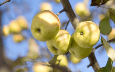 Płatki owsiane z jabłkami, imbirem i jagodami goji
