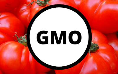 GMO – a co to?