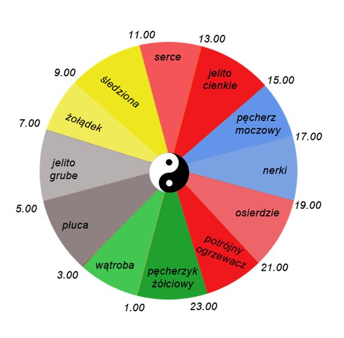 grafika zegarz narzadów