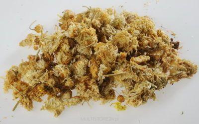 Kwiat chryzantemy chińskiej – Flos Chrysanthemi